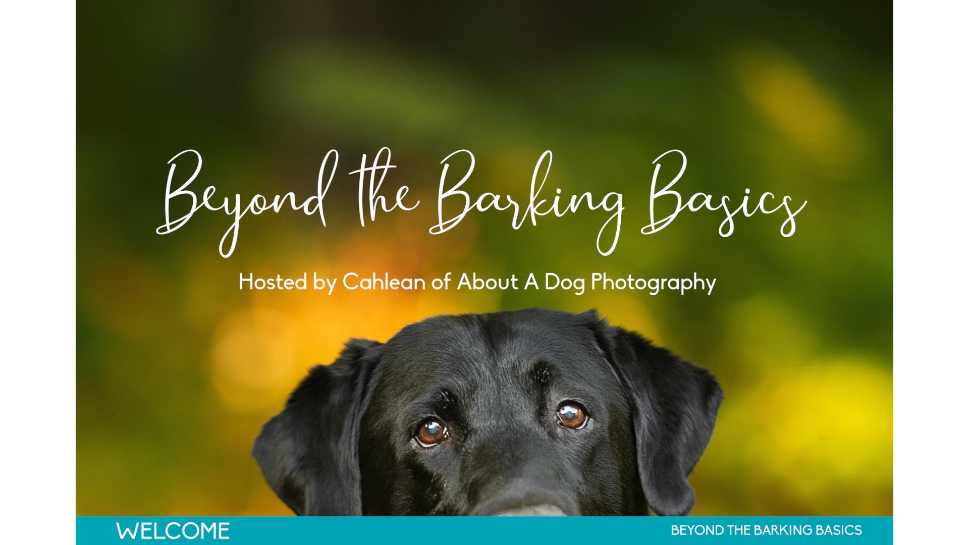 Beyond the Barking Basics